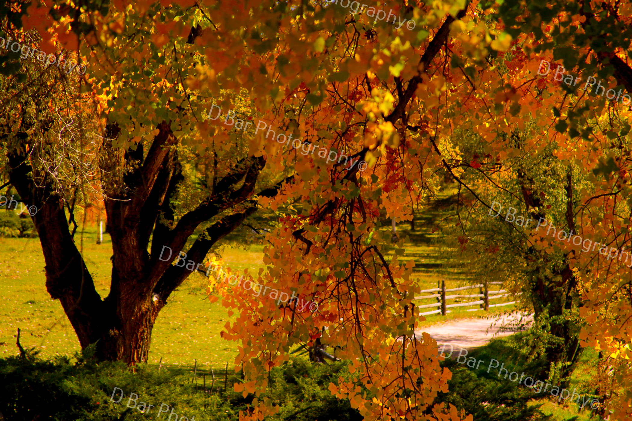 meadow in the fall